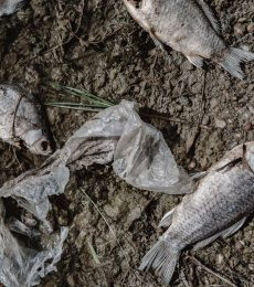 Dead fish on the lake. Contamination by chemicals pond.