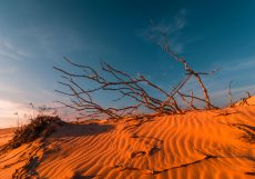 stunning-view-of-lonely-sand-dunes-PEHMLXP